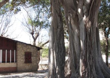 IMG_150406-Palermo giardini
