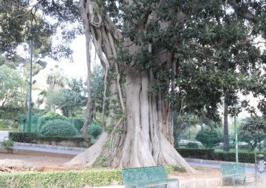 IMG_160412-Palermo giardini