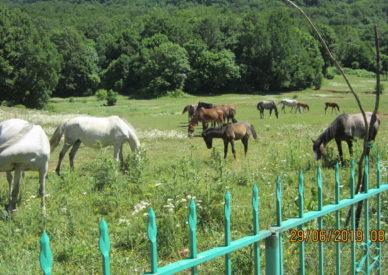 Tirana-Cavalli al Dajti
